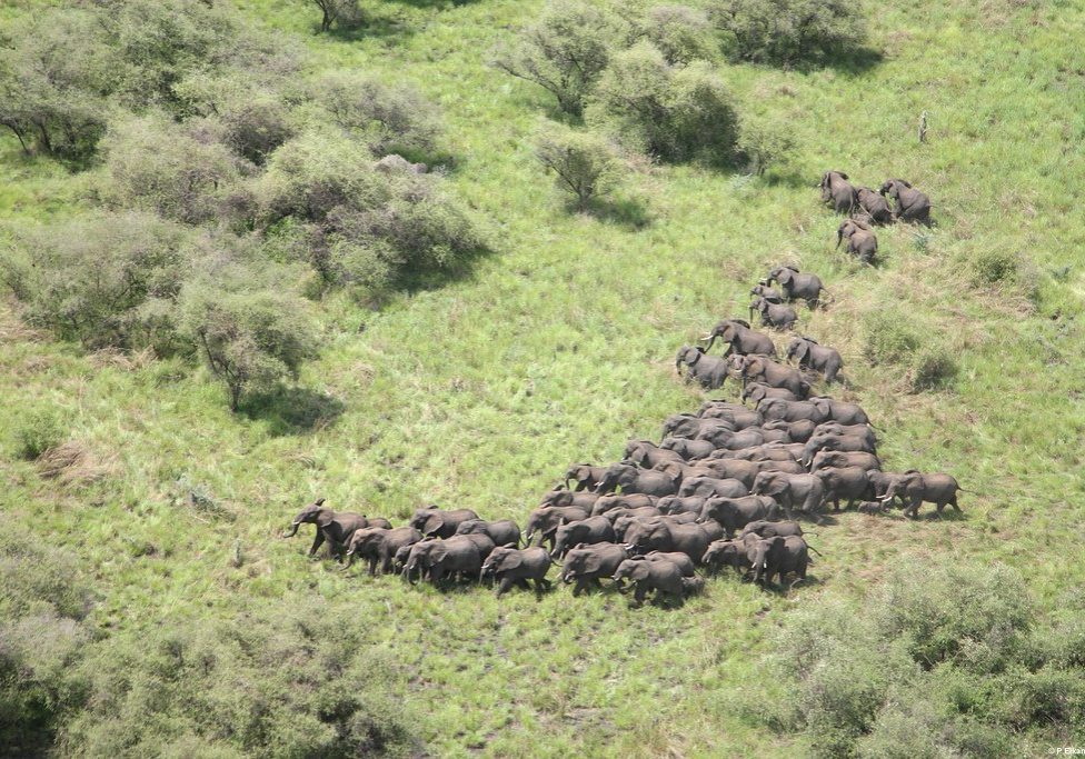 Elephants herding in South Sudan's Boma-Jonglei Landscape. Photo Credit: WCS/USAID