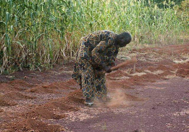 Yacouba Sawadogo digs planting pits to restore degraded land. (Photo: Chris Reij, WRI)