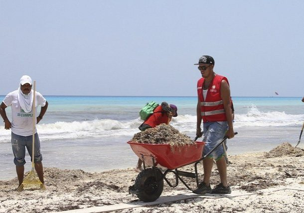 Sargassum removal on Caribbean beaches in the Yucatan are funded by the Mexican government. (Source: Secretariat of Environment and Natural Resources, Mexico.)